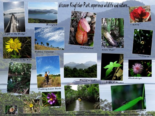 Coron Nature & Wildlife Experience