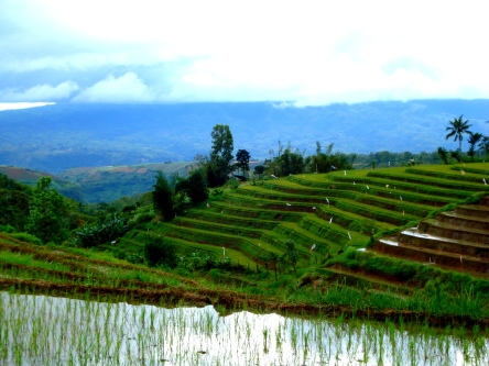 DSB's Rice Terraces. Enjoy it while it's clean and green!