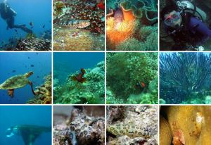 Danjugan Island Marine Biodiversity - all researched and recorded.