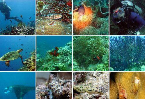 Danjugan island marine biodiversity2