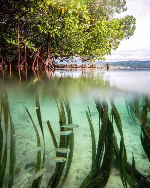 Danjugan seagrass